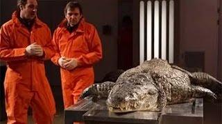 Анатомия крокодила HD