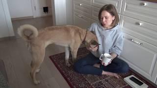 Как взять собаку из приюта?