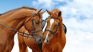 Клип конный спорт(скорость)+описание