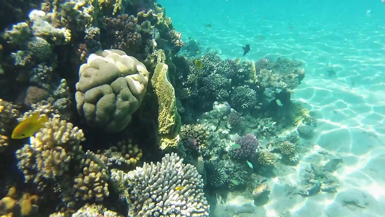 snorkeling red sea, hurghada eygpt, sunrise royal makadi bay - YouTube