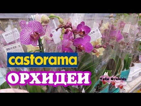 ОРХИДЕИ Касторама Orchids Castorama ORCHID |  Орхидея | ОРЕНБУРГ