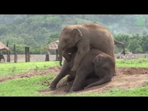 Cute and funny baby elephants