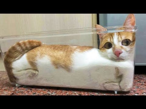 Funniest  Cats And Dogs - Awesome Cute Pet Animals' Life