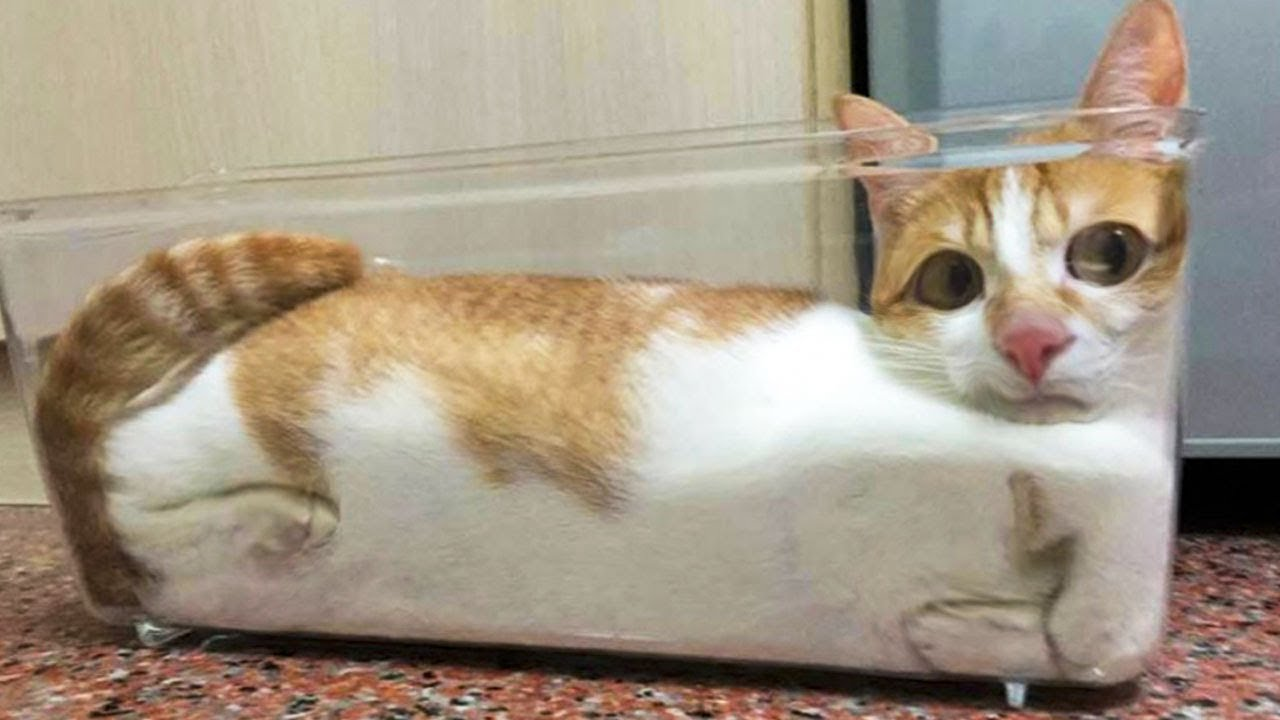 funniest cats and dogs
