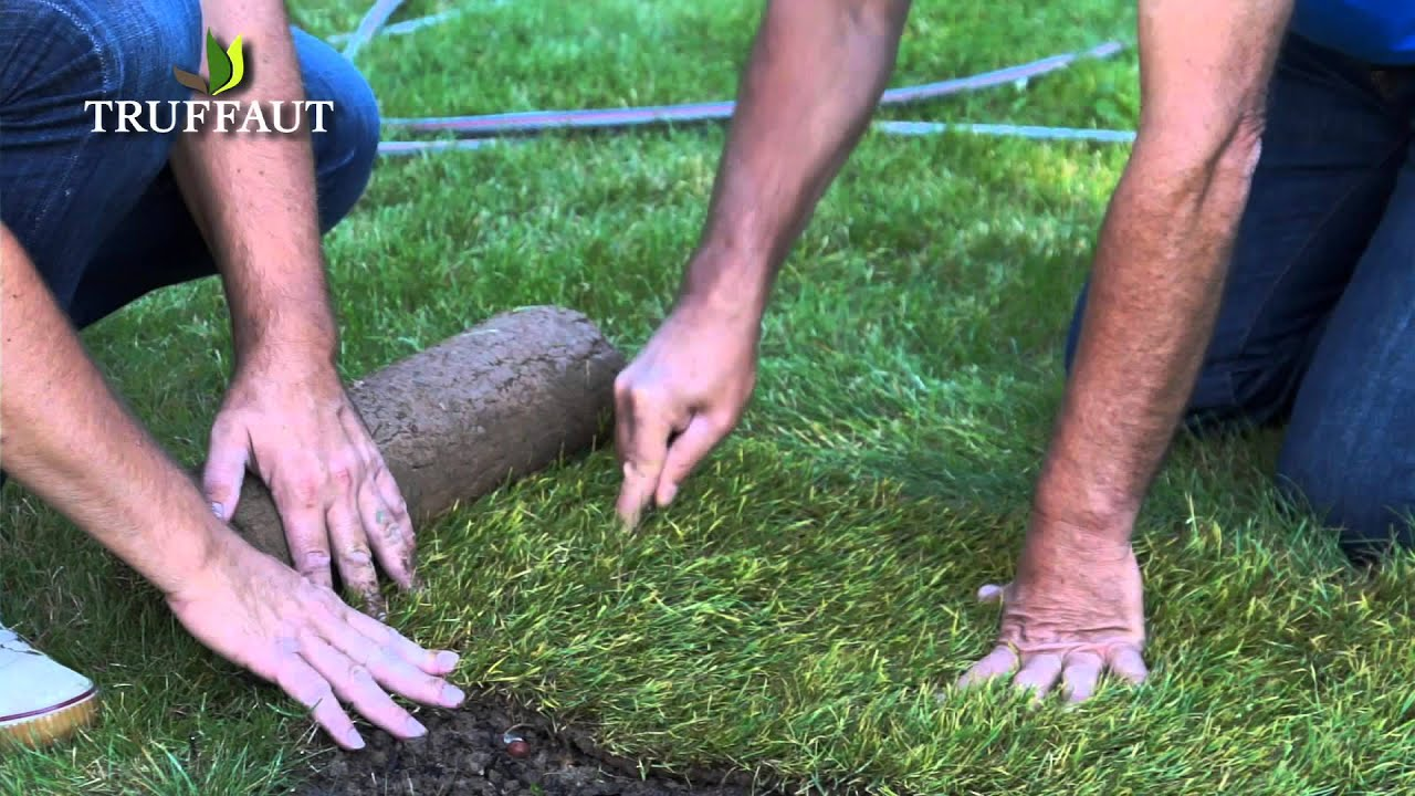 comment poser du gazon naturel en rouleau jardinerie truffaut tv