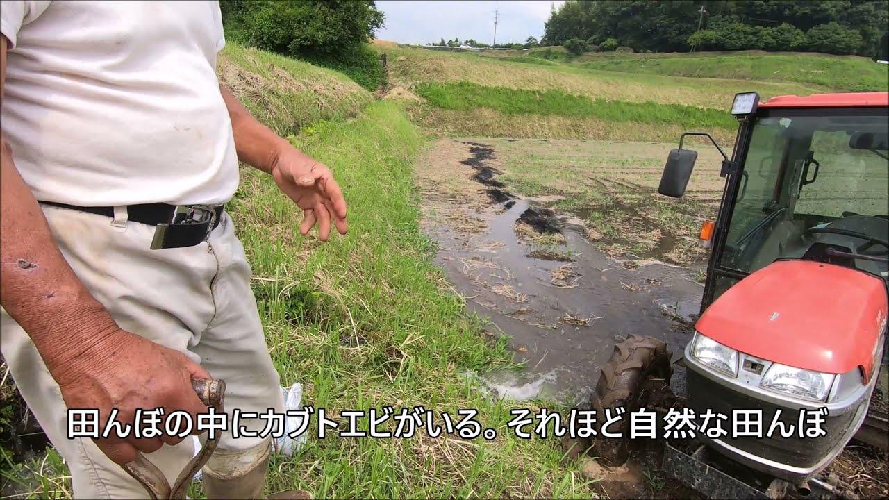 【 菊池米 】農家さんを追跡 裏話が聞けた。阿蘇の伏流水で育つ菊池米 日本遺産 二千年つづく米づくり 菊池渓谷 棚田 Delicious rice atural healing