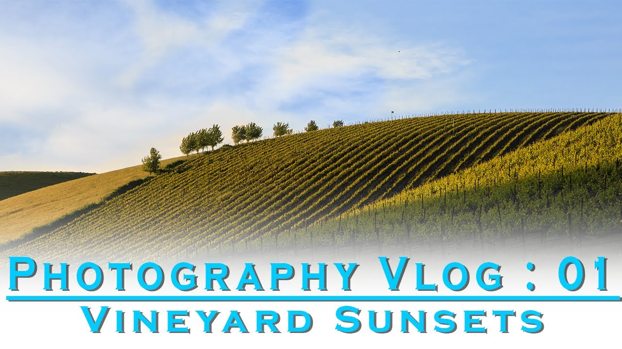 Photography Vlog:01- Vineyards at Sunset