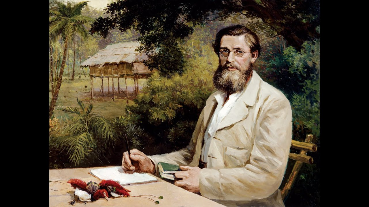 the life of alfred wallace Alfred russel wallace, a british naturalist, was born jan 8, 1823 as we hope is  well-known, wallace was the co-discoverer, with charles.