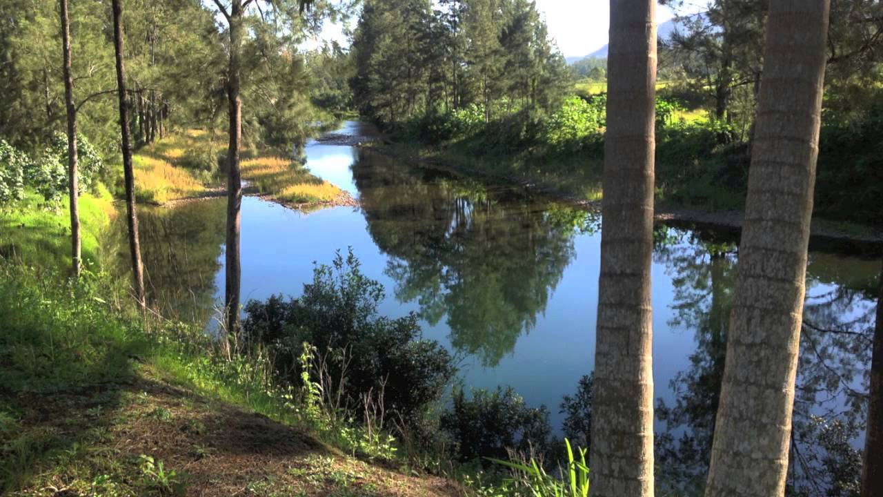 Property For Sale Bellingen