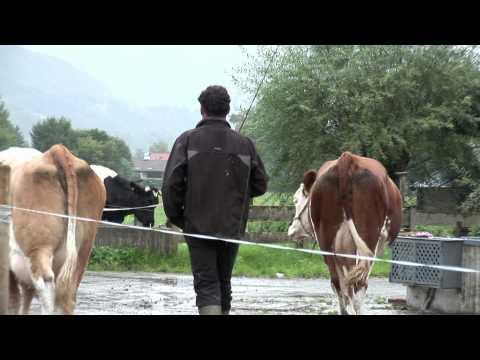 Wie wird aus Gras und Heu Käse in TegernseerLand Qualität