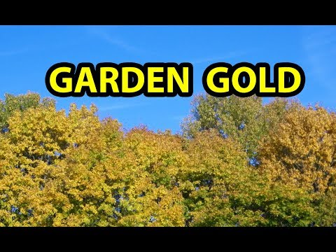 COMPOST with Fall Leaves Only( aka, leaf mold )to make organic garden soil, Part 1