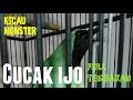 Burung Cucak Ijo Full Tembakan  Mp3 - Mp4 Download