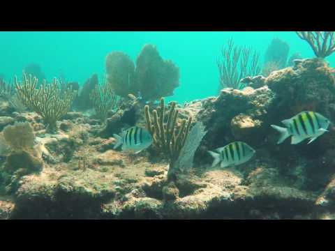 Florida keys diving at Alligator Reef