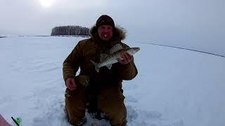 Рыбалка на Обском, СУДАК! Мы его всё-таки нашли!