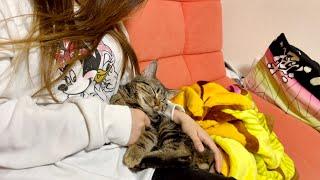 飼い主と一緒にドラマを見てたらいつの間にか寝落ちしてしまった子猫w