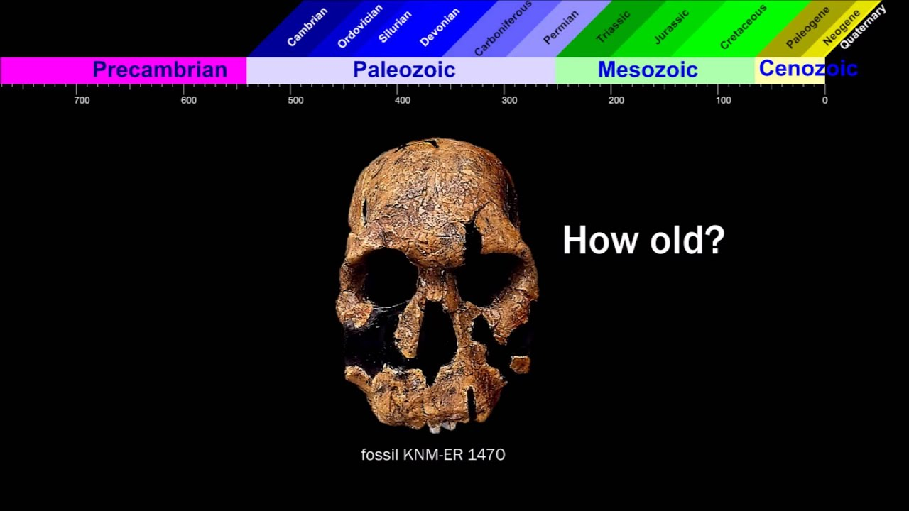 Radiocarbon dating bones episode