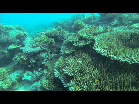 Snorkelling in Nias Utara, Nias Island, Indonesia.