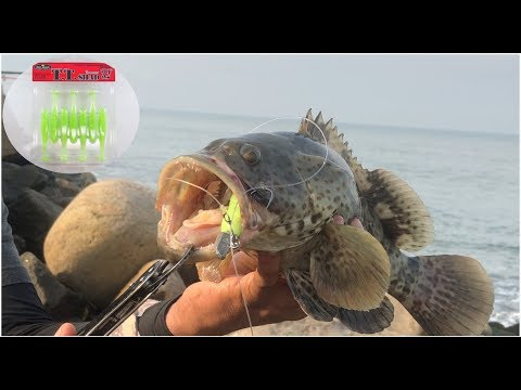 Grouper Fishing using Bait Breath TT Shad 3.2""