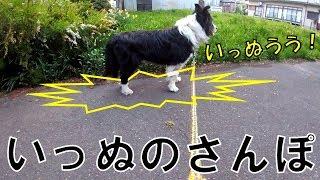 お散歩するといっぬも喜ぶし、 飼い主も健康になるし、 普段何気なく住...