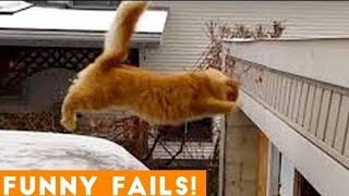 TRY NOT TO LAUGH - Funny Animal Fails Edition 2019