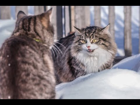 TOP 10 BEAUTIFUL CAT BREEDS(2019)