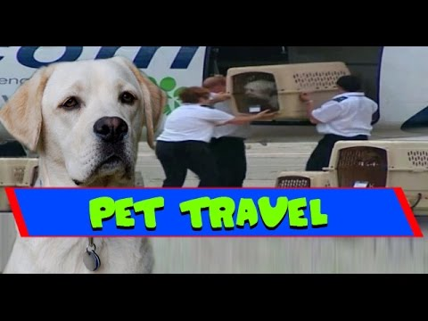 How Pets Travel in Planes - Pet Airways
