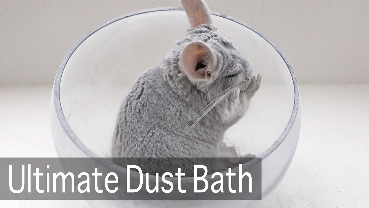 Ultimate Chinchilla Dust Bath
