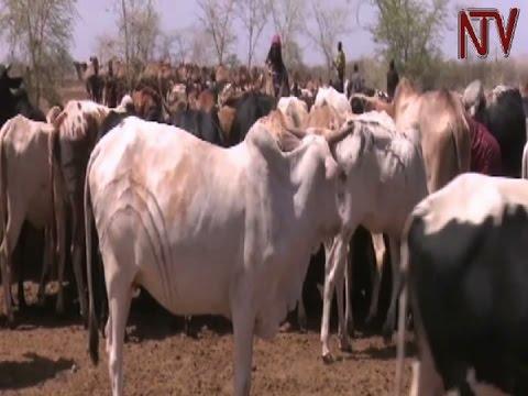 Ugandan EALA MPs urge Kenya to disarm Turkana and Pokot pastoralists