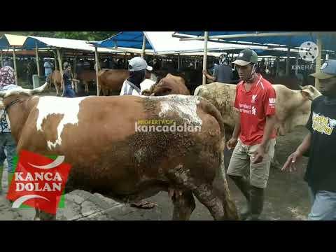 Pasar Sapi Muntilan Magelang Jawa Tengah - Indonesia Cow Market