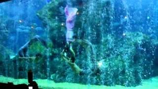 Repeat youtube video Pra A-pai Manee @SEA LIFE Bangkok Ocean World
