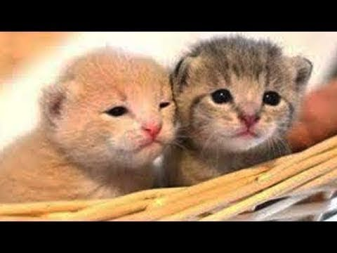 Cute baby Animals - Cutest moments of Puppies, Kittens and Pets 2019
