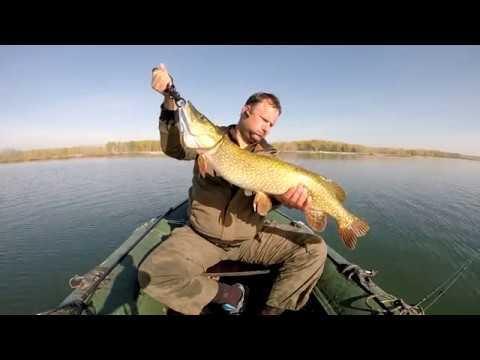 Pescuit pe Olt la stiuca 2