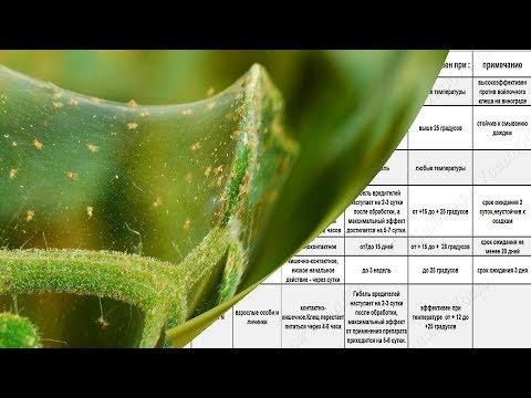 Лучшие препараты от паутинного клеща Сводная таблица