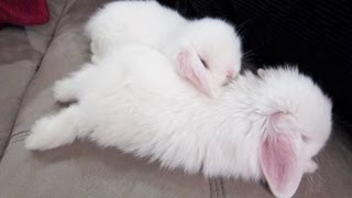 The SEXIEST bunnies alive