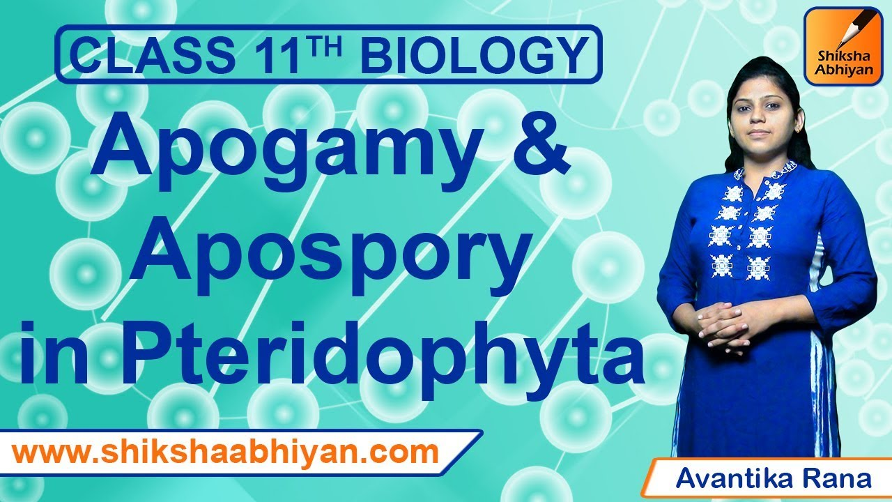 apogamy and apospory in pteridophytes