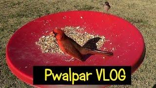 Pwalpar VLOG Cajuns Story 2 2 2016