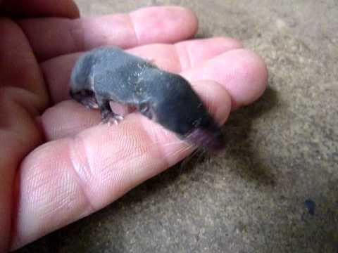 Sperma in meiner Hand Baby