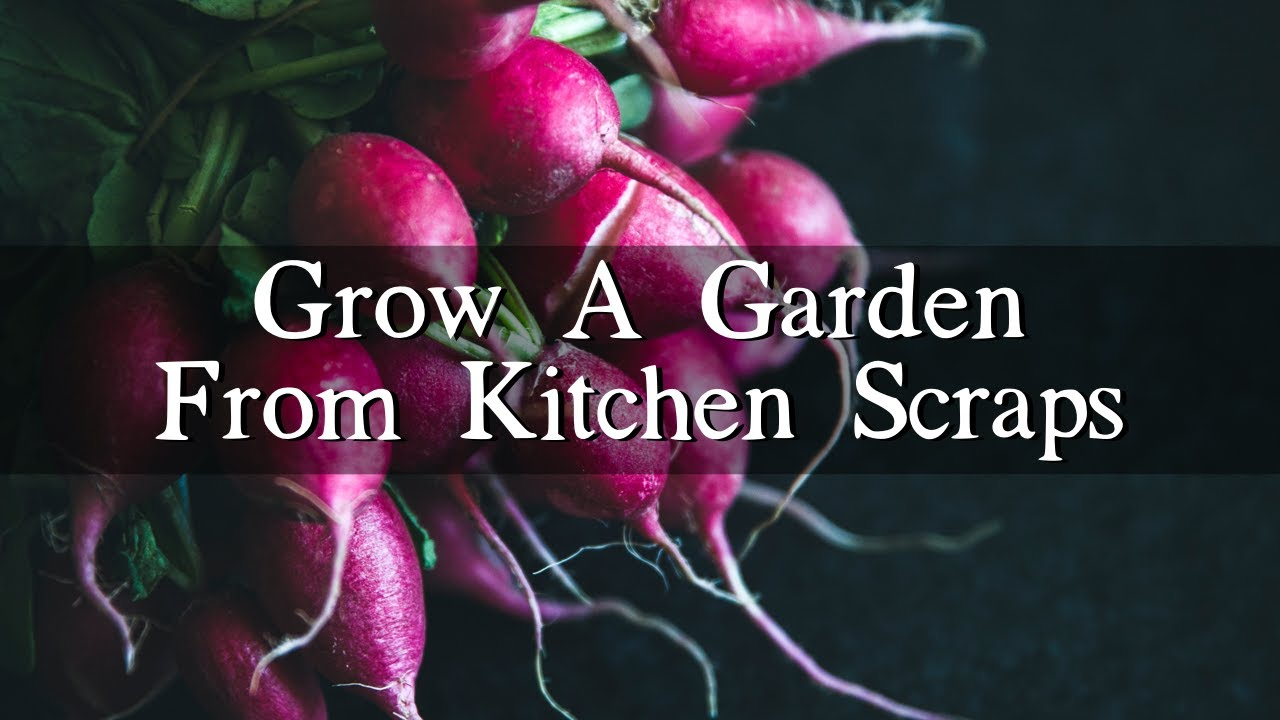 Kitchen Garden Foods How To Grow A Vegetable Garden From Kitchen Scraps Youtube