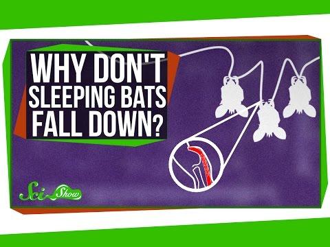 Why Don't Sleeping Bats Fall Down?