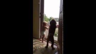 собака танцует и мальчик