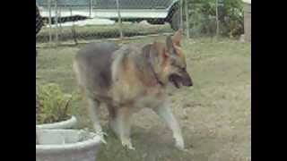 Dog Seizure Or Muscle Spasm Help Us!