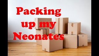 Packing up Neonate Ireland  Dolly Dreams Ep 496