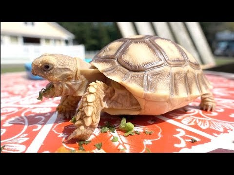 A TORTOISE STORY - Huberts Daily Life   NICOLE SKYES