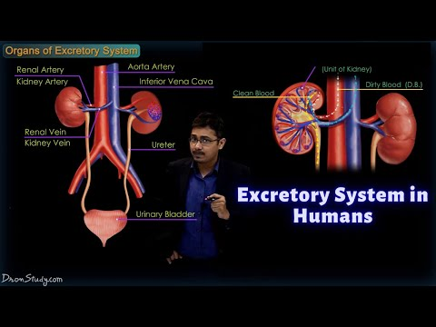 Excretory System in Humans | CBSE Class 10 Science | Biology