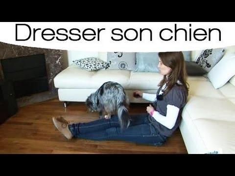 Eduquer facilement son chien - YouTube