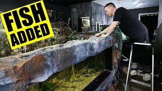 2,000G aquarium gets NEW FISH -The king of DIY