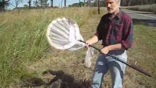 How to Net Collect Wasps and Bees.wmv