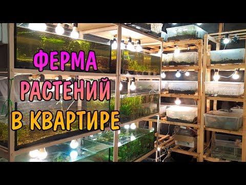 ФЕРМА РАСТЕНИЙ В КВАРТИРЕ. AQUATIC PLANTS FARM