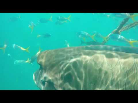 OceanRafting Great Barrier Reef Australien Unterwasser
