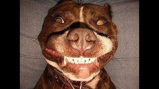 Прикольные и смешные фото улыбающихся животных